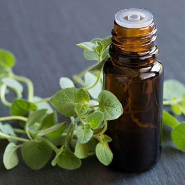 پونه کوهی - گیاهی شگفتانگیز با خواص متنوع دارویی و پزشکی