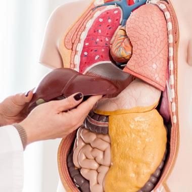 معجزه رژیم غذایی سالم برای درمان بیماری کبد چرب