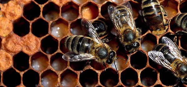 سلامت قلب با عسل طبیعی