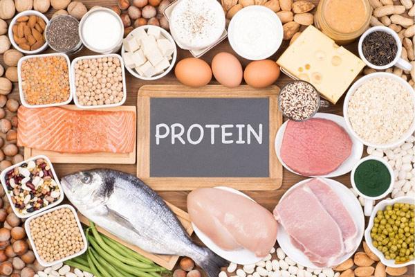 اهمیت پروتئین برای بدن