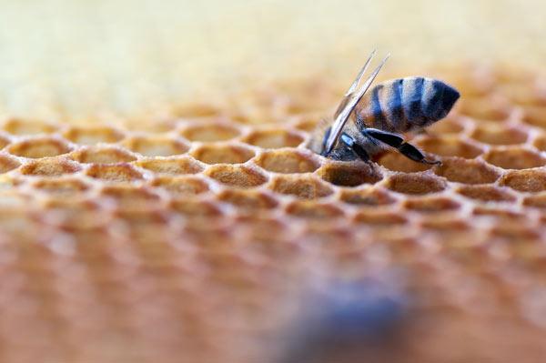 خواص درمانی مهم عسل