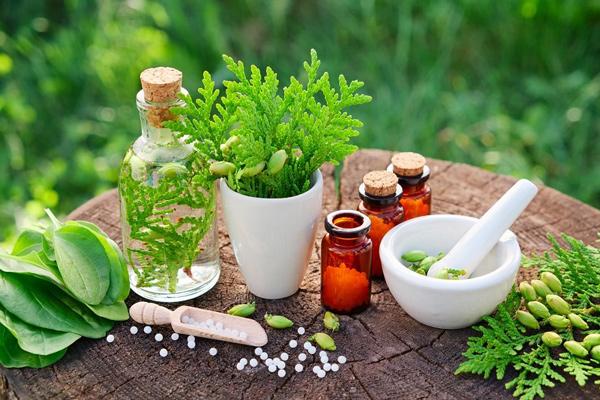 گیاهان دارویی دارای اثر بخشی در روند درمان دیابت