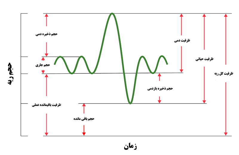 نمودار ظرفیت ریه