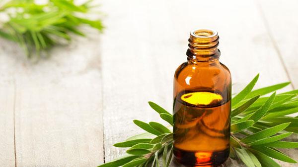 درمانهای خانگی زگیل تناسلی زنان روغن درخت چای